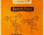 تمرينة الـFlat Bench Press احسن ولا Incline لشد الصدر