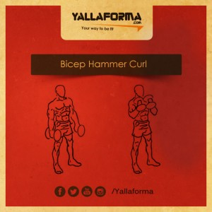 Bicep Hammer Curl