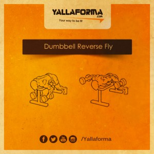 Dumbbell-Reverse-f;y