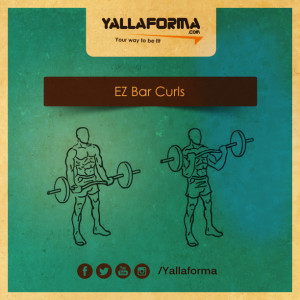 EZ Bar Curls