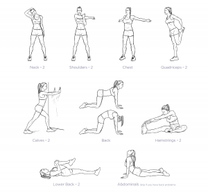 Workout Stretches